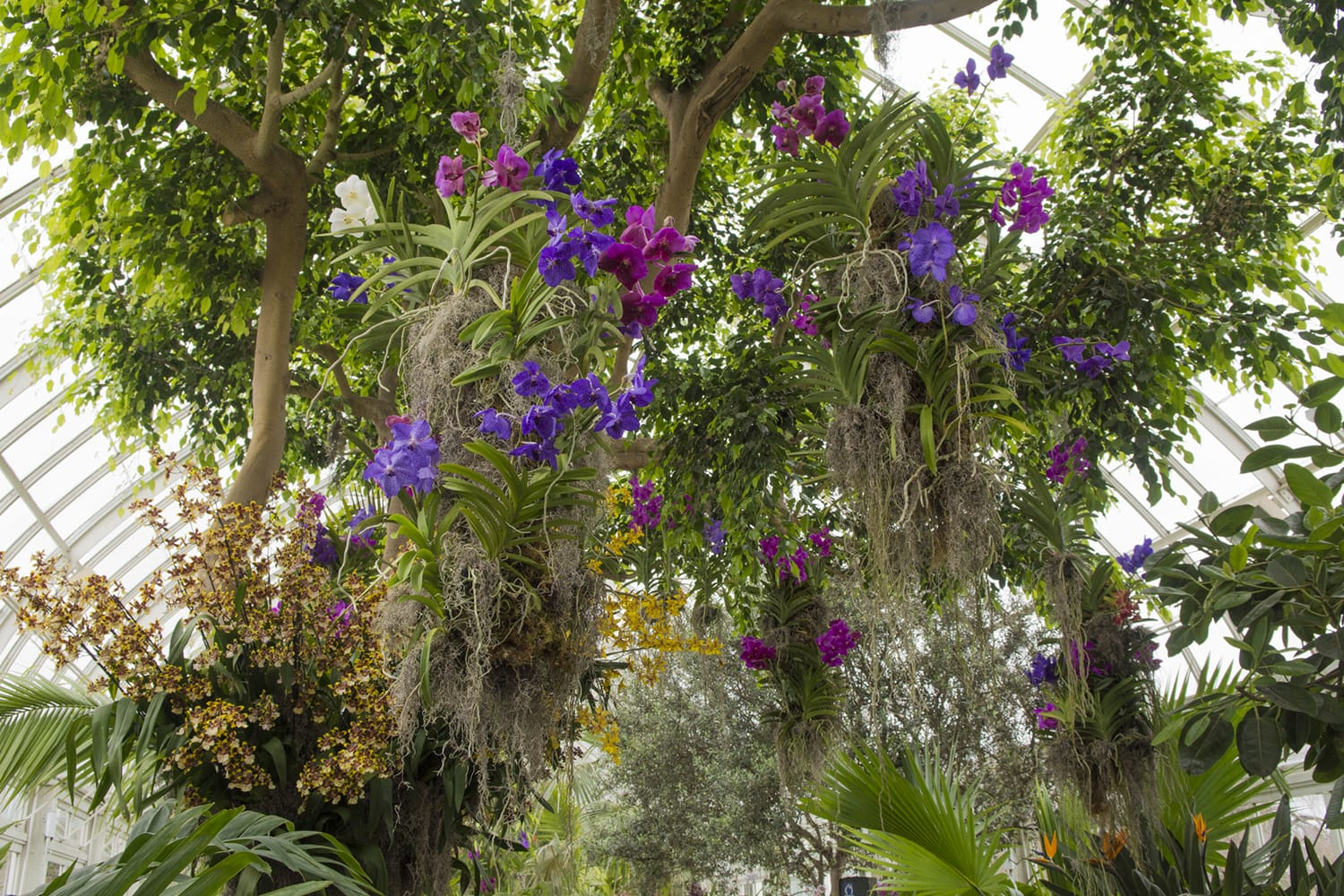 Day Trips: Orchidelirium at the New York Botanical Garden | Living ...