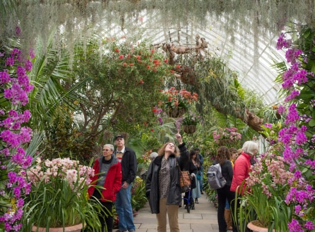 Day Trips: Orchidelirium at the New York Botanical Garden
