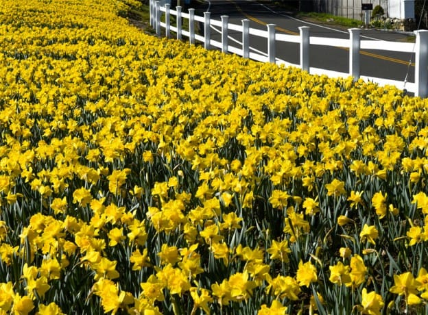 Photo Gallery: Splashes of Spring Color Around Greenwich