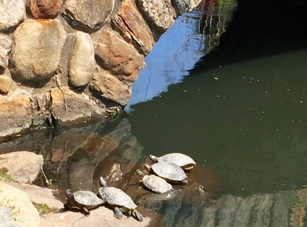 The Turtles and You: So Happy Together | Greenwich Perambulator