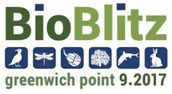 Bioblitz at Greenwich Point Park