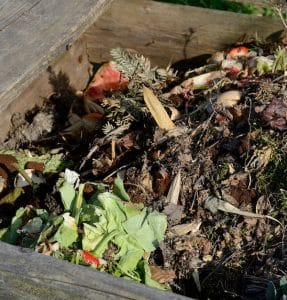 Vermicomposting - First Sunday Science Series