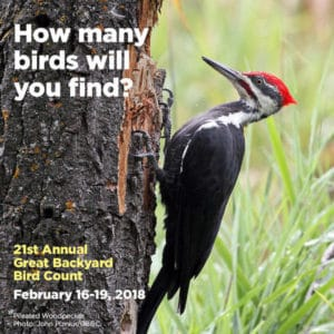 Great Backyard Bird Count at Audubon Greenwich