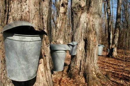 Maple Sugar Day at Greenwich Land Trust
