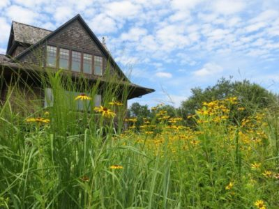 Spring Wildflower Ecology and Photo Walk - Audubon Greenwich