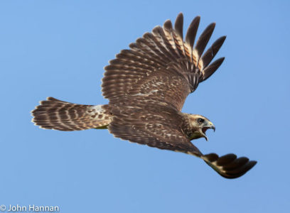 Hawk Watch Kick-Off and Raptor ID Workshop - Audubon Greenwich