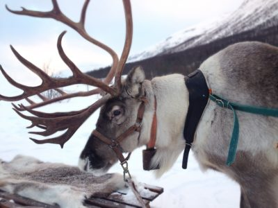 10th Annual Greenwich Reindeer Festival & Santa's Village