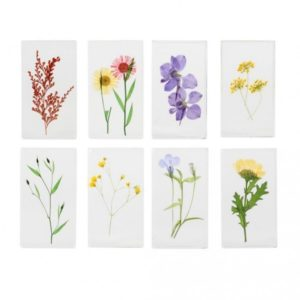 Science Sundays - Pressed for Flowers - Bruce Museum