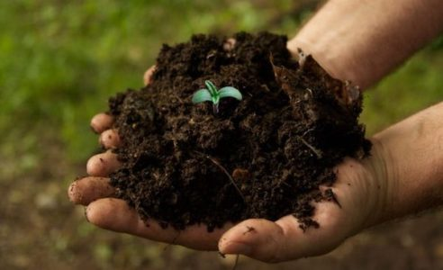 Lecture - Soil Health and its Impact on Climate Change - Greenwich Botanical Center
