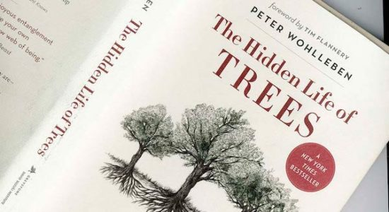Lecture - 'The Hidden Life of Trees' Author Peter Wohlleben