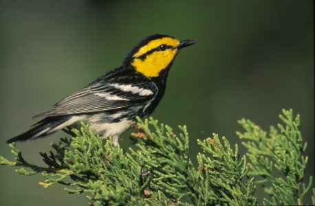 Spring Migration Bird Walk - Audubon Greenwich