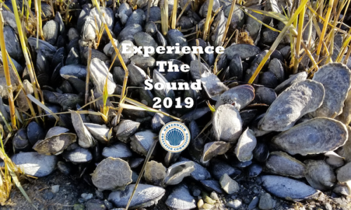 Town of Greenwich Shellfish Commission Presents 'Experience the Sound'