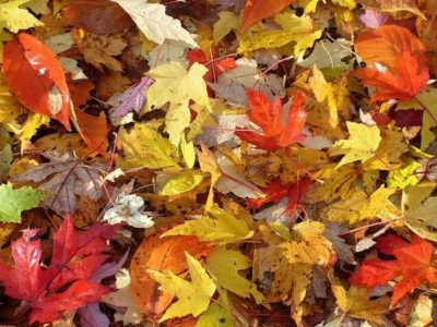 Fall Family Day - Autumn and Fall Colors - Bruce Museum