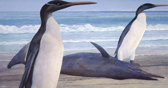 Fred Elser First Sunday Science Series - March of the Fossil Penguins - Seaside Center at Greenwich Point