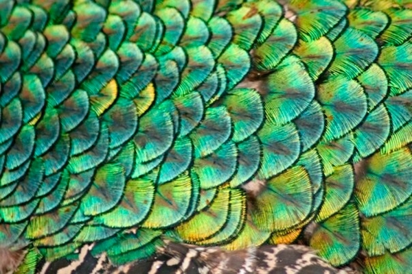 Science Solvers - Feathers and Scales - Bruce Museum