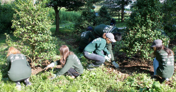 Holly Grove Clean-Up | Friends of Greenwich Point