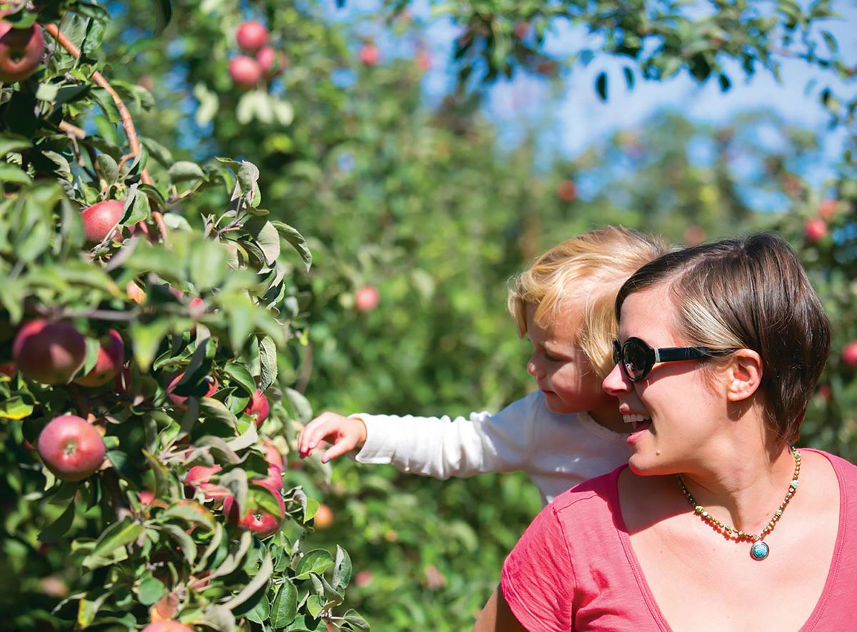 Best Places To Pick Apples (and pumpkins) near Fairfield County | Living Greenwich
