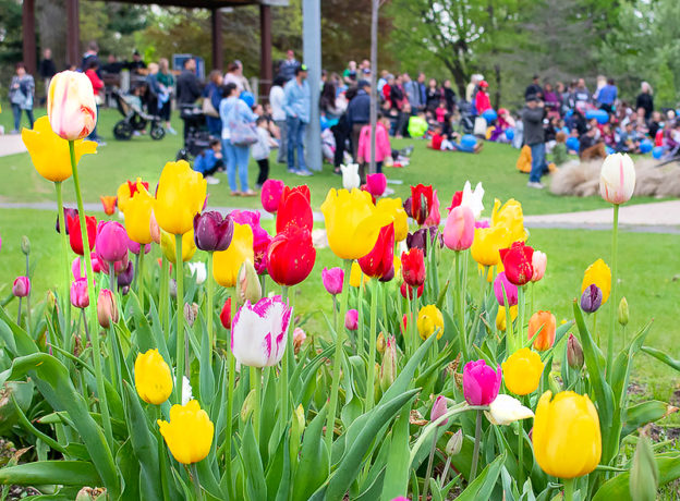 Photo Gallery: Town of Huntington's 18th Annual Tulip Festival