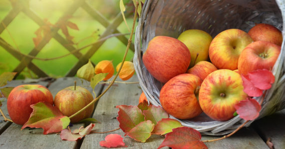 2018 Annual Huntington Historical Society Apple Festival