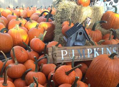 Fall Festival Returns to Main Street Nursery