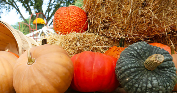 Fall Festival at Main Street Nursery
