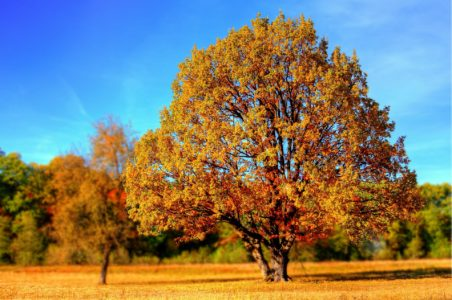Fall Seasonal Stroll at Caumsett State Park