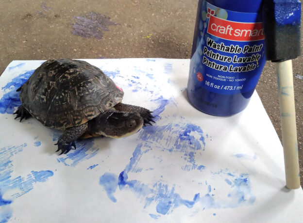 Register For A Turtle Experience At Cold Spring Harbor Fish Hatchery & Aquarium