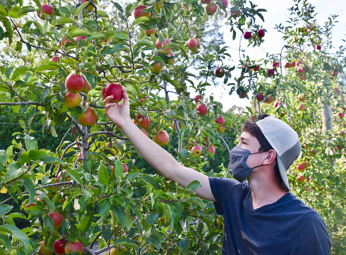 Best Places To Pick Apples (and pumpkins) on Long Island