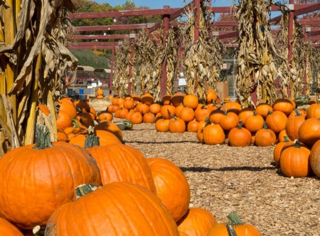 ESCAPES: Enjoy a Taste of Autumn at a Local Orchard