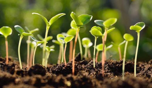 Volunteer Opportunity - Seed-to-Seed Initiative - Greenwich Land Trust