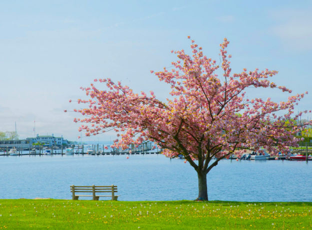 Photo Gallery: The Fleeting Spring Colors of Greenwich, Connecticut