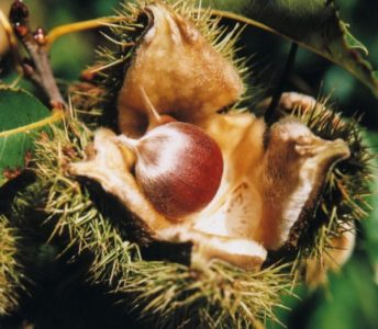 Seed-To-Seed Learning Series: Native Plants Seed Saving - Greenwich Land Trust