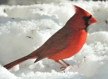 Fred Elser First Sunday Science Series at the Seaside Center - A Century of Tallying Birds for the Annual Christmas Bird Count
