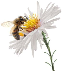 Earth Day - What's the Buzzzz About Bees - Greenwich Library