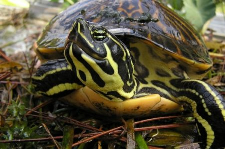 Fred Elser First Sunday Series at the Seaside Center - The Big Turtle Year