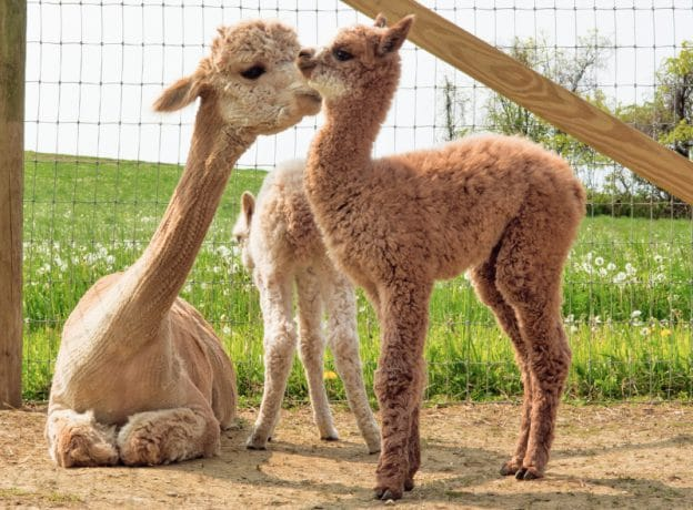 ESCAPES: The Boutique Shops, Local Artisans, and Alpacas of Millerton, NY
