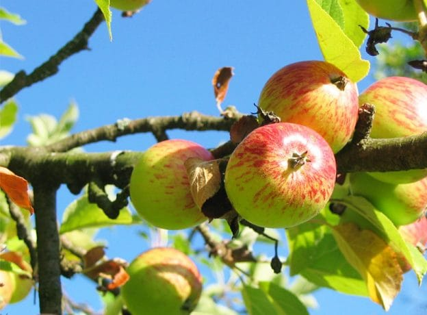 Autumn Daytrips: Best Long Island Places to Pick Apples and Pumpkins Near Huntington