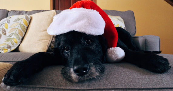 Christmas in July at Little Shelter